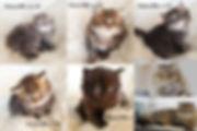 Kattungar till Salu_OlgaRedina.jpg