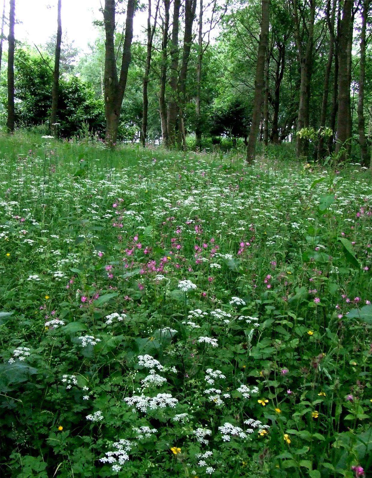 wood-meadow.jpg