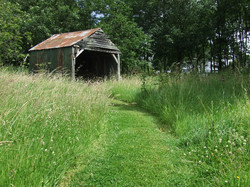 Grass cow shed.jpg