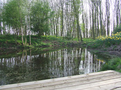 Pond in spring with daffodils