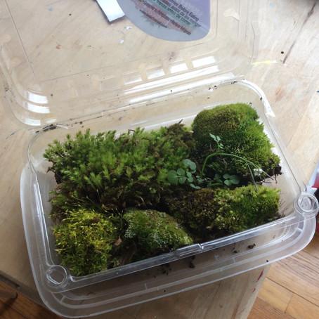 Make a Moss Pie