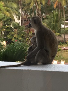 balcony monkey 3