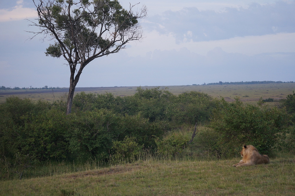 Safari 24