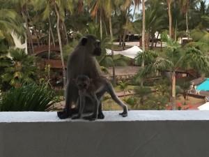 balcony monkey 2
