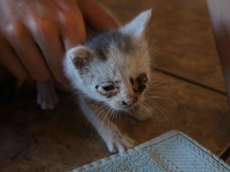 Kitten Rescue!
