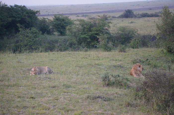 safari 38