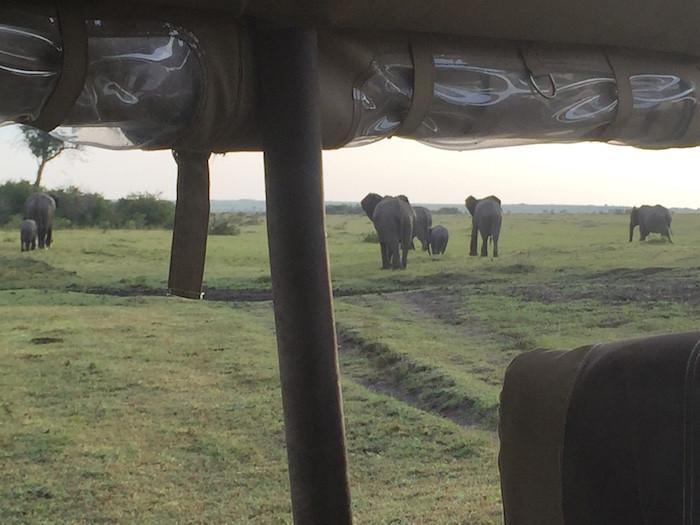 safari 47