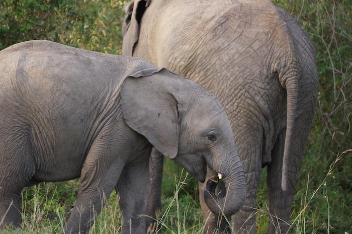 safari 44