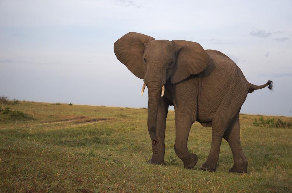 Safari 34