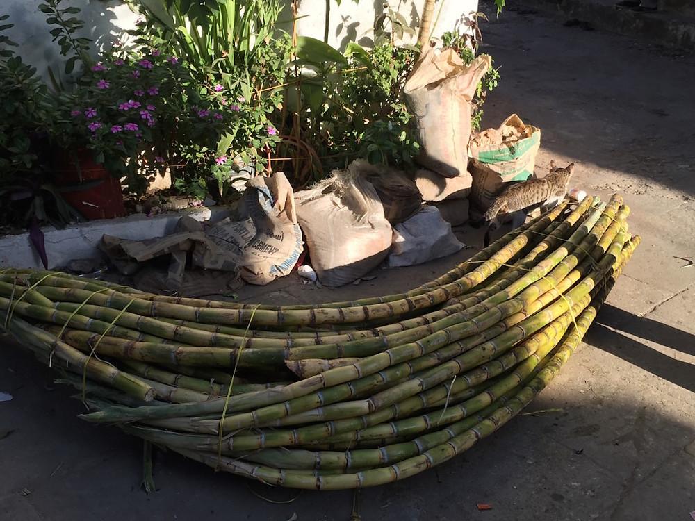 Zanzibar Sugar Cane