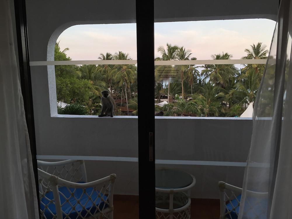 balcony monkey 1