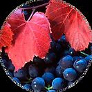 Organic Red Vine Extract