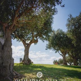 Le pouvoir de l'huile d'olive