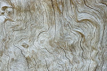 Principio attivo note ambrate e legnose Opaco Family