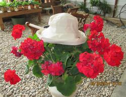 Greenhouse Art