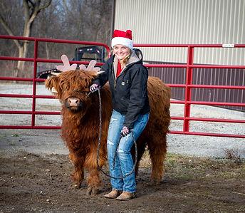 Christmas cow-65.jpg