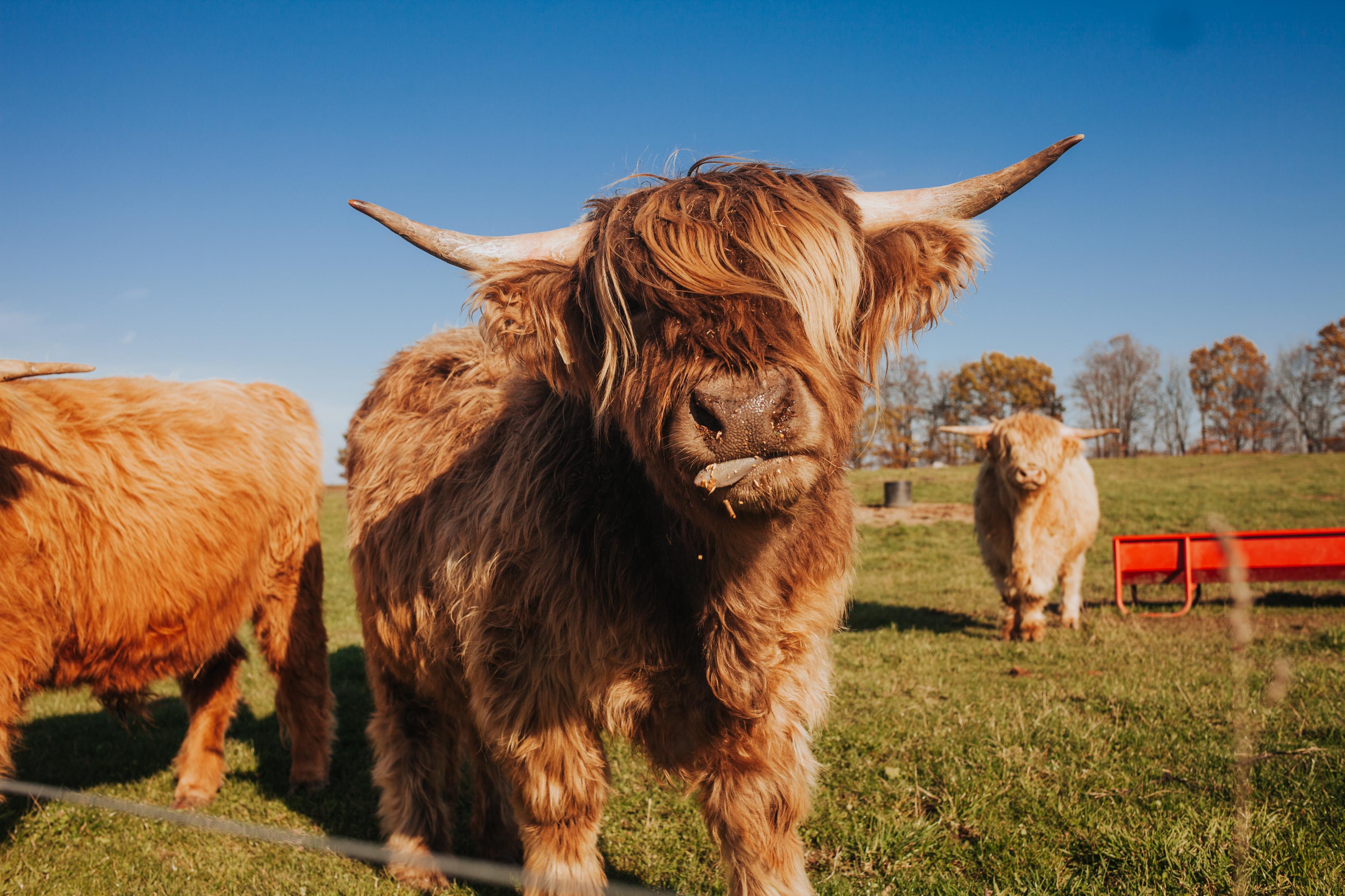 Beautifully Treated Animals
