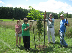 Building the Orchard