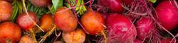 cropped root veggies.jpg