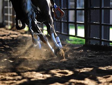 Ranch horse legs.jpg