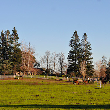 front pasture and house best.jpg