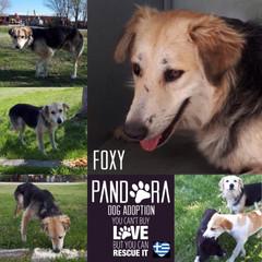 foxy.jpg