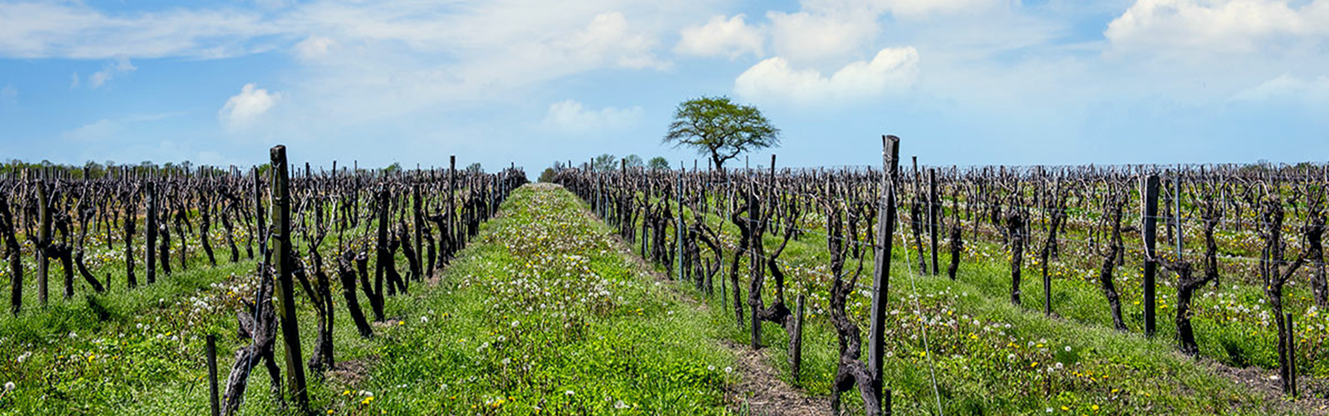 brenne-barley-field v2