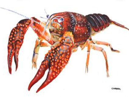 #3006 Crawfish Print