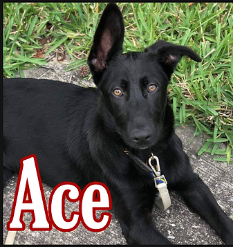 ace 5-1-19.png