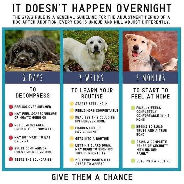 Dog Adoption Rule of 3s.JPG