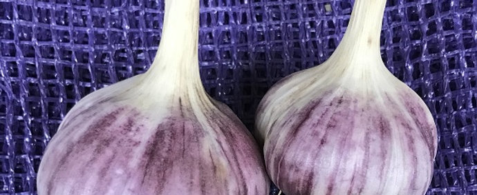 Hardneck Culinary Garlic