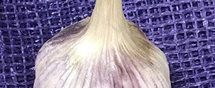 Softneck Culinary Garlic