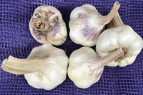 Medford Garlic