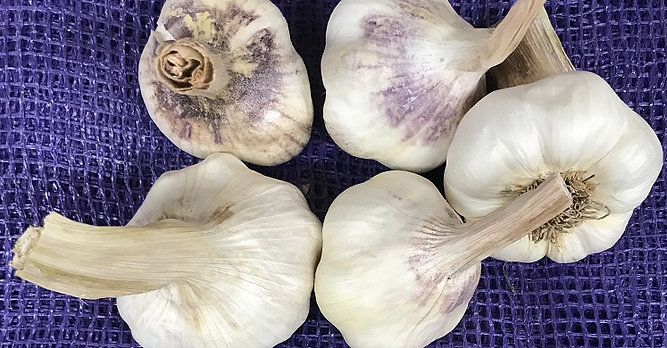 Medford Garlic