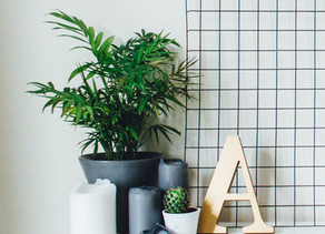 Planting Indoors