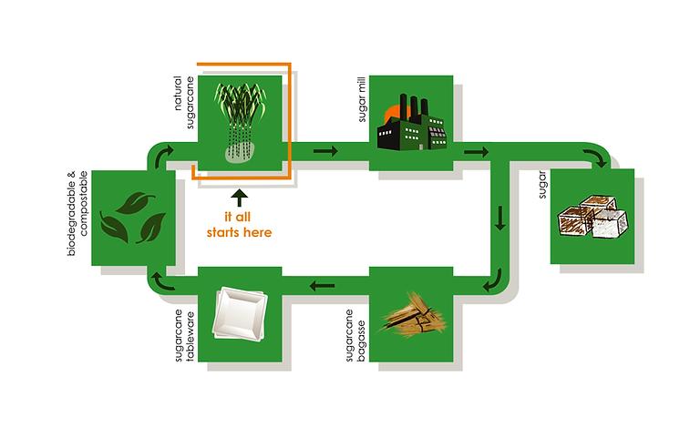 sugarcane_infographics.png