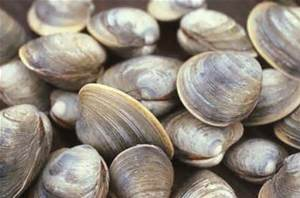 clams bunch