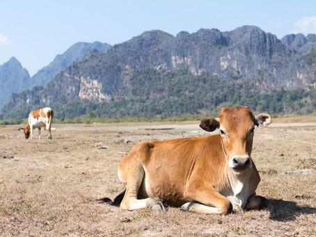 Sécheresses et changement climatique : comment l'agriculture française va-t-elle pouvoir survivre ?