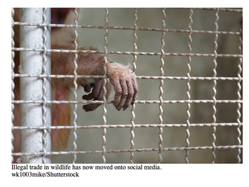 How machine learning can help fight illegal wildlife trade on social media