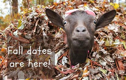 Fall dates coming sooooon! (1)_edited.jpg