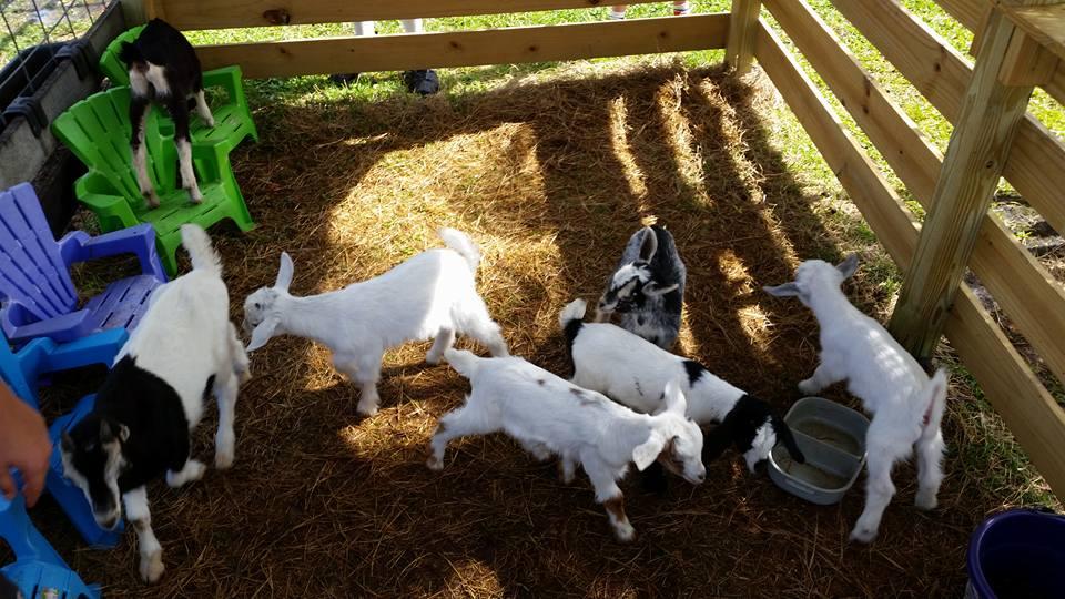 LaPorte Farms Guest