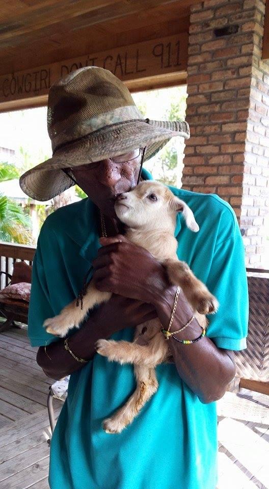LaPorte Farms Baby Goat2