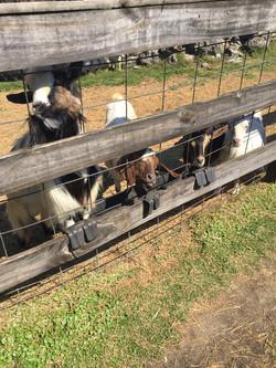LaPorte Farms5(6)