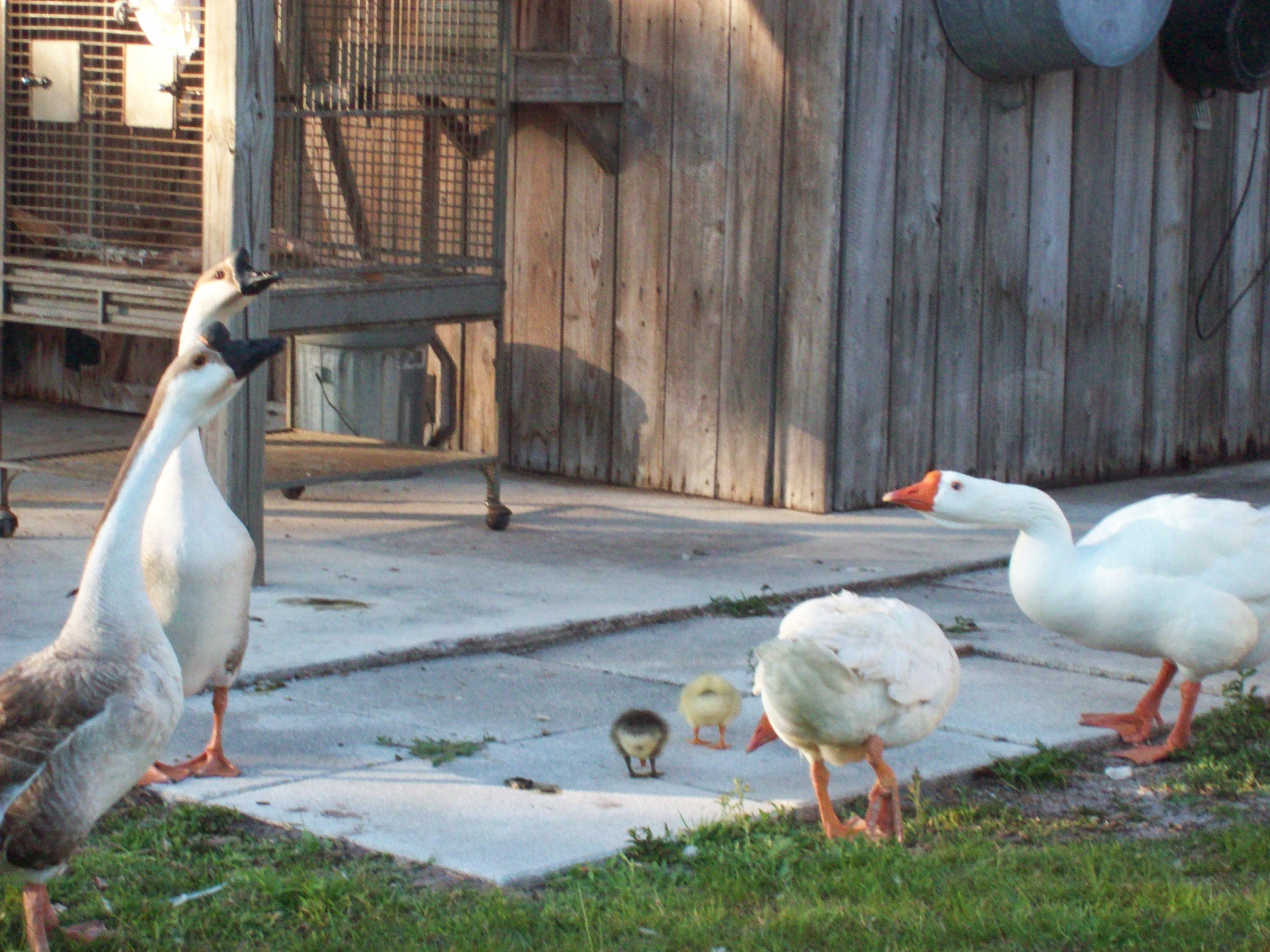 Nasa family picnic 2011 066
