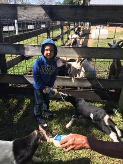 LaPorte Farms8(4)