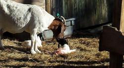LaPorte Farms3(1)