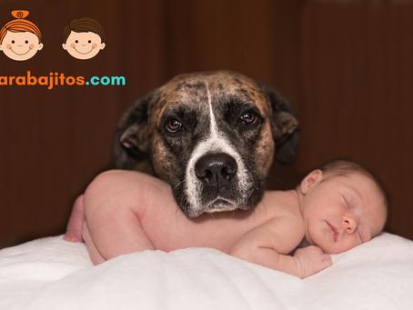 Las mascotas y los bebés