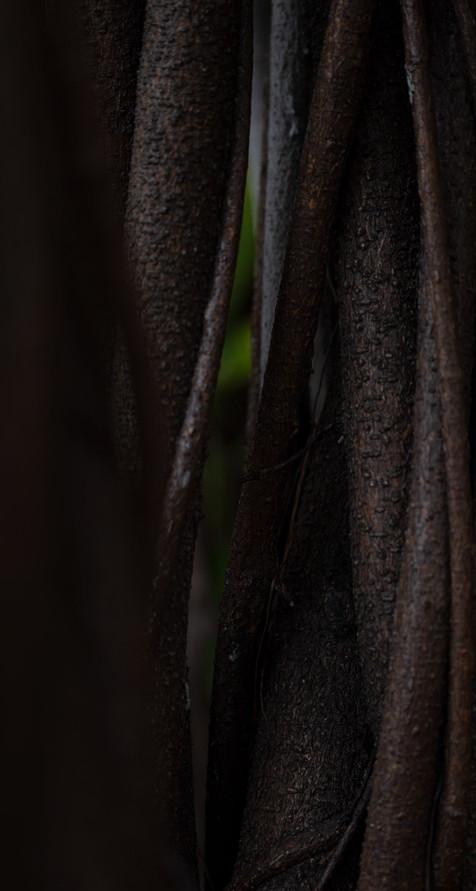עין הנמר' מאת תהילה אור שלו'