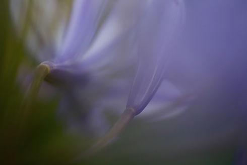 צילום רגישות וקשיבות מאת תהילה אור שלו