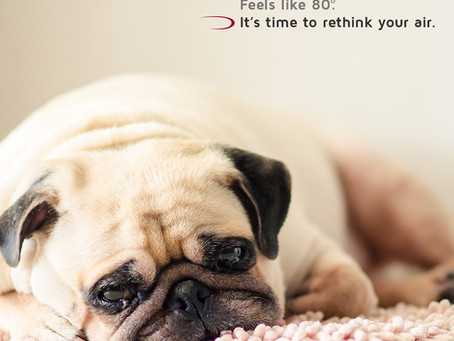 Dog Days of Summer - Is Your HVAC System Ready?